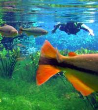 snorkeling in brazil